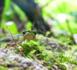 La paix en Colombie, espoir des chercheurs de découvrir de nouvelles espèces