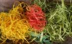 Des plantes pour colorier