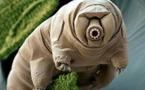 Un animal quasi indestructible pourrait partager ses super pouvoirs