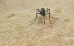 """USA: un pesticide répandu par avion a été un """"facteur clé"""" pour éliminer le Zika"""