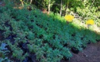 Il cultivait son paka sur les hauteurs de Teroma (Màj)
