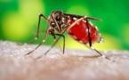 L'épidémie de Zika est terminée en Guyane française
