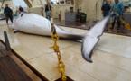 L'avenir des baleines au menu d'une réunion internationale