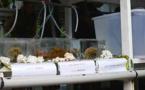 Criobe : deux lauréats en Master et Doctorat Bio-marine récompensés samedi