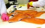 Le saumon frais non bio moins contaminé qu'avant, contrairement au bio (presse)