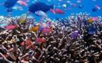 Deux tonnes de coraux et 25.000 poissons tropicaux saisis en Italie