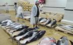 Pêche : record des recettes à l'exportation