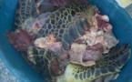 Tortues : Les braconniers de Bora Bora jugés en audience foraine