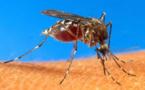 Epidémie de dengue déclarée en Nouvelle-Calédonie