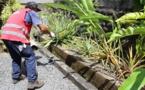 Un 3e cas de dengue 2 confirmé à Arue