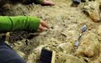 """Colombie: découverte d'un fossile de 127 millions d'années """"unique au monde"""""""