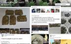 """La justice enquête sur du paka en """"vente libre"""" sur Facebook"""
