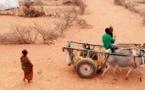 Choléra/diarrhée: une épidémie fait plus de 500 morts depuis janvier en Somalie