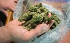 Arrestations pendant une distribution gratuite de cannabis à Washington
