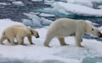 """Climat: les menaces pour les villes se précisent, la """"résilience"""" s'organise"""