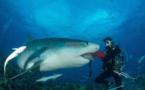 Shark Feeding : Un moniteur de plongée se fait mordre par un requin