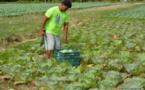 Taina Viriamu: de l'agriculture au magasin d'alimentation