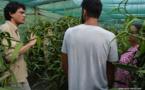 Trois Polynésiens révolutionnent la culture de la vanille locale