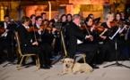 Turquie: un chien mélomane nouvelle star des réseaux sociaux