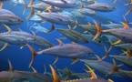 Quelques idées reçues sur la pêche hauturière en Polynésie française