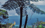 Carnet de voyage - Mont Marau : balade parmi la flore d'altitude