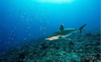 Légende de la princesse Tuihana et du requin protecteur
