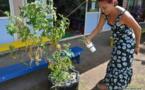 Mahina : l'école Fareroi Maternelle développe la permaculture