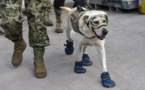 Frida, la chienne héroïque qui a conquis le Mexique après le séisme