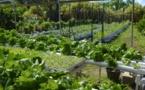 Des aides allant jusqu'à 150 millions de francs pour les projets agricoles