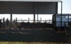 Des éleveurs portugais attendent désespèrement la pluie