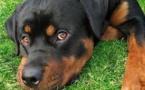 Feux d'artifices : enfermez vos chats et vos chiens pour le Réveillon !