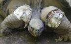 Te ara tau, la tortue mâle du jardin botanique est morte
