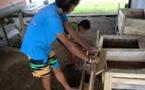 Les CJA exposent leur travail mardi et mercredi au marché de Taravao