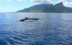Page enfant : Une journée pour penser aux baleines