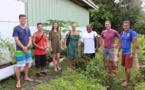 Bora Bora : des employés de l'Intercontinental s'intéressent à l'agriculture bio