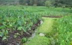 Comment savoir si vos légumes et fruits sont bio