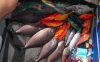 Chasse sous-marine: Mémorial Colas Hoata et 2ième journée du championnat de Polynésie par équipes à Tautira