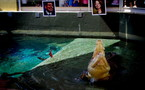 Législatives australiennes : Harry le crocodile a déjà choisi