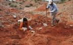 Découverte d'un dinosaure géant vieux de plus de 200 millions d'années