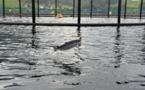 Chili: crainte de crise environnementale après la fuite de 690.000 saumons traités aux antibiotiques