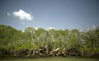 Page enfant : Les mangroves, un écosystème remarquable
