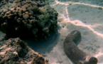 """Ouverture de la campagne de pêche réglementée aux """"rori"""" à Raroia et Faaite"""