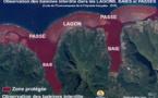 Trois baleines à bosse dans le lagon de Bora Bora