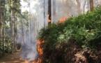Cinq hectares de brousse partis en fumée à Papeari