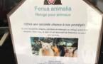 Les associations de protection animale ont besoin de votre aide