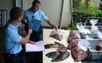 Fraude à la pêche de tortues marines: 6 personnes interpellées à Arue