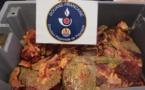 25 kg de viande de tortue saisies à la gare maritime