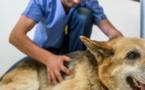 Une loi du Pays pour encadrer la profession de vétérinaire