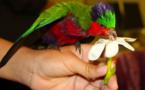 Carnet de voyage - A Rimatara vole l'oiseau arc-en-ciel