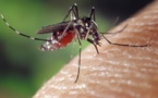 La dengue de type 1 circule toujours à Tahiti, Bora Bora et Rangiroa.